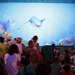 ocean-park-wladyslawowo-opinie-atrakcje