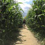 władysławowo-labirynt-w-polu-kukurydzy-opinie-ceny-atrakcje-31
